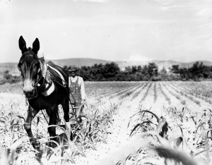 Man_Plowing_Field_With_Horse_1280158178